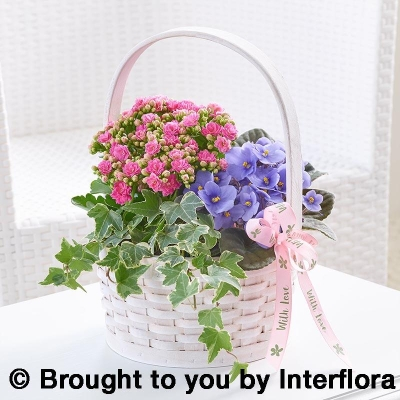 Pretty Mothers Day Planted Basket