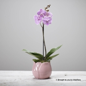 Sweet Pink Orchid